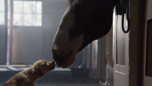 """Puppy Love"" Superbowl ad by Budweiser"
